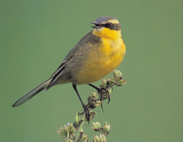 鸟类图片 - 动物世界