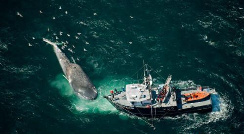 世界最大动物蓝鲸-动物世界;