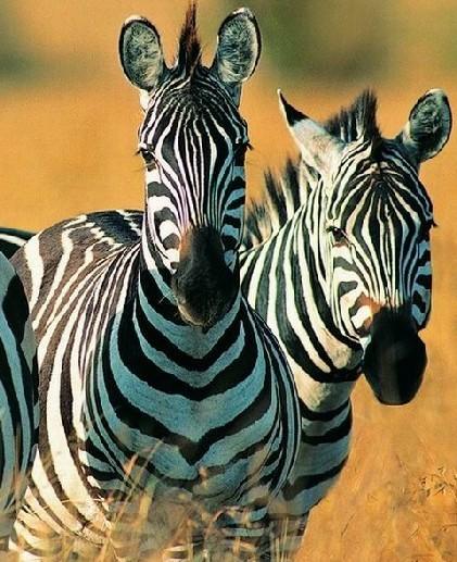 动物生存本领主题墙大班图片