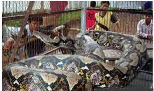 世界最大动物2012年最新收集(二)