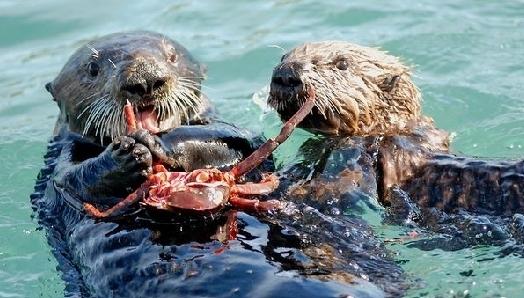 8种全球濒危海洋动物