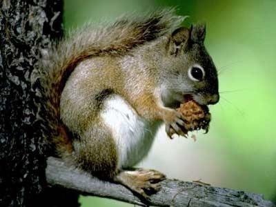 冬眠动物图片松鼠