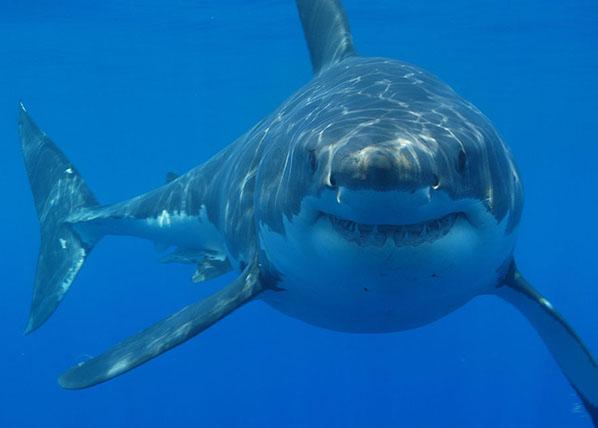机械鲨鱼手绘图
