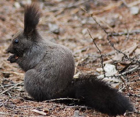 松鼠的尾巴-松鼠的尾巴的作用和特点