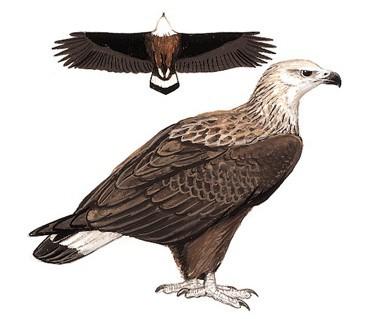 壁纸 动物 鸟 鸟类 雀 371_319