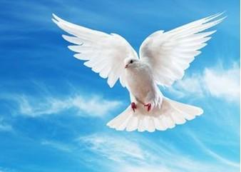 """画了一只昂首展翅的鸽子,当时,智利着名诗人聂鲁达把它称为""""和平鸽"""""""