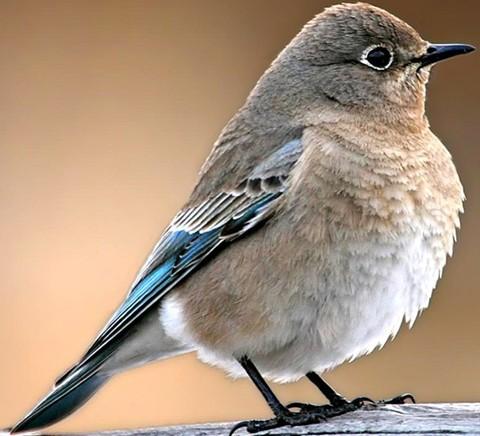 保护鸟类的公约_鸟类的保护色