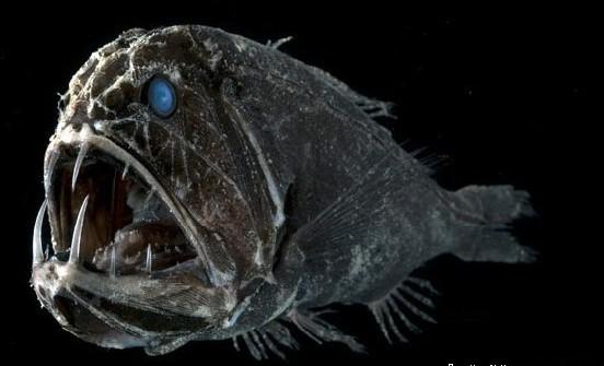 它们在水下成群结队,对哺乳动物的味道特别敏感,头盖骨特厚,牙齿特