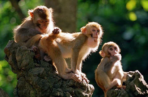 动物世界的母爱故事(长)-描写动物世界的母爱
