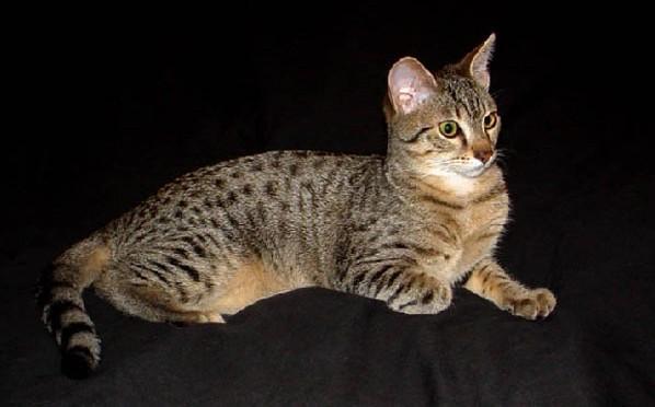 墙壁甚至金字塔里面的楔形文字里都可以发现有关猫的