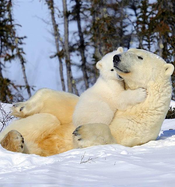 北极熊兔子是毛发的?动态表情白色包安图片